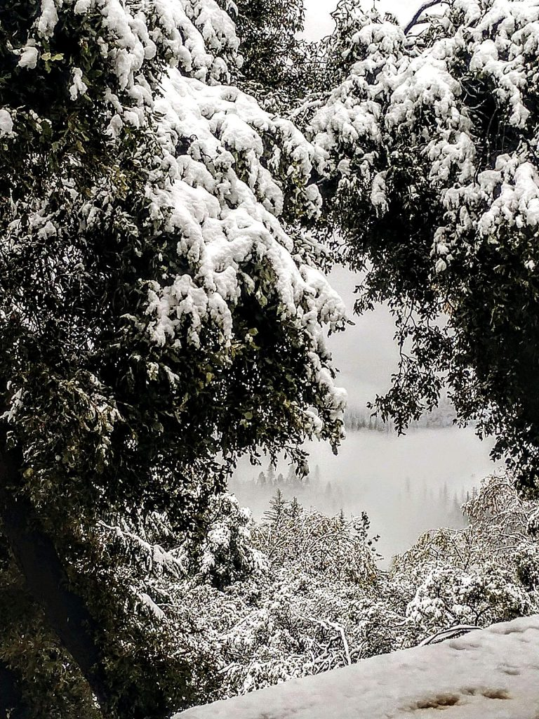 Snow in the foothills on April 5, 2020.