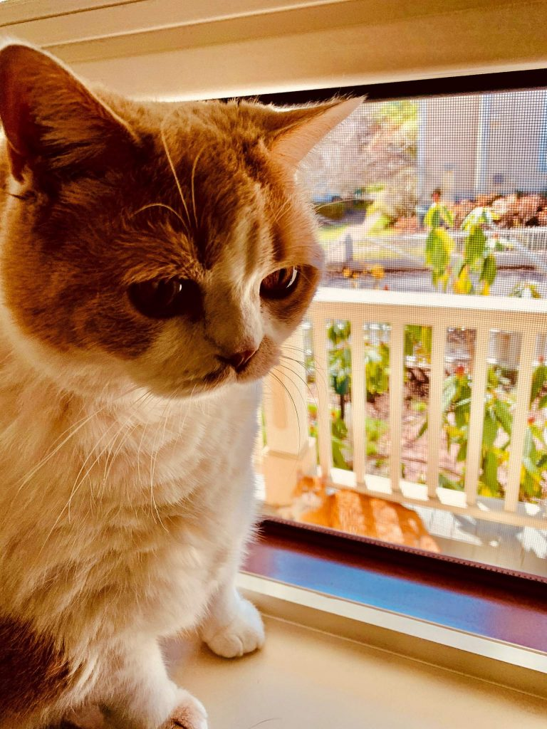 Ziggy greeting neighbor's Saucy sunning on our porch in Nevada City.