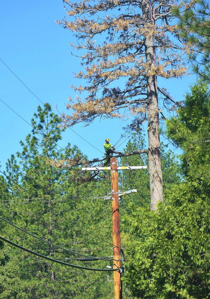 Tree workers on Greenhorn Road on April 16.