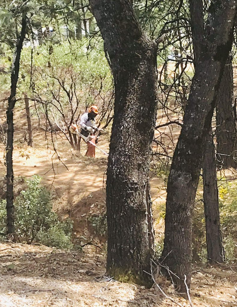 Hooray for worker clearing brush along Litton Trail in Grass Valley.