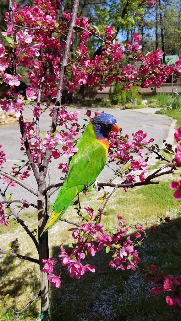 Willie J. Birdie out for a photo shoot in our newly planted crabapple tree.