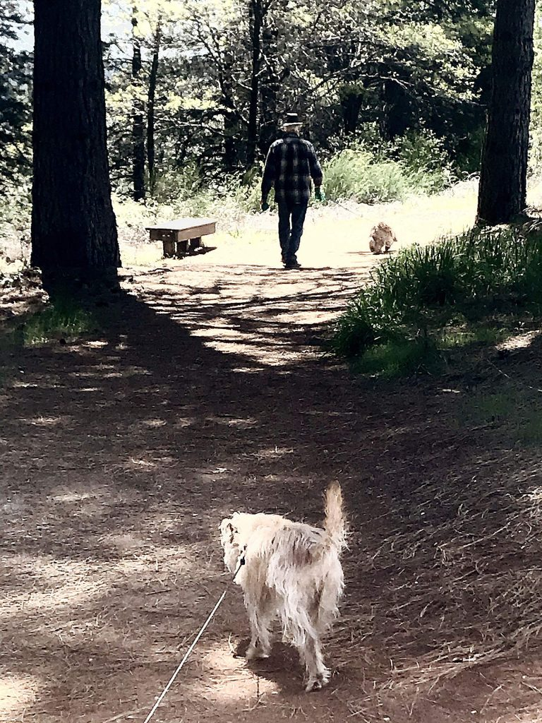 Views along the way while walking the dogs on Litton Trail in Grass Valley.