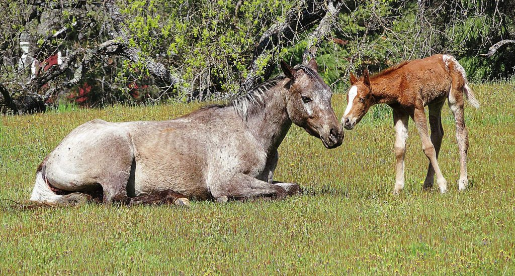Horses and baby horse off Highway 20 in Penn Valley, just past the light at Rough and Ready Highway on Cattleman Drive.