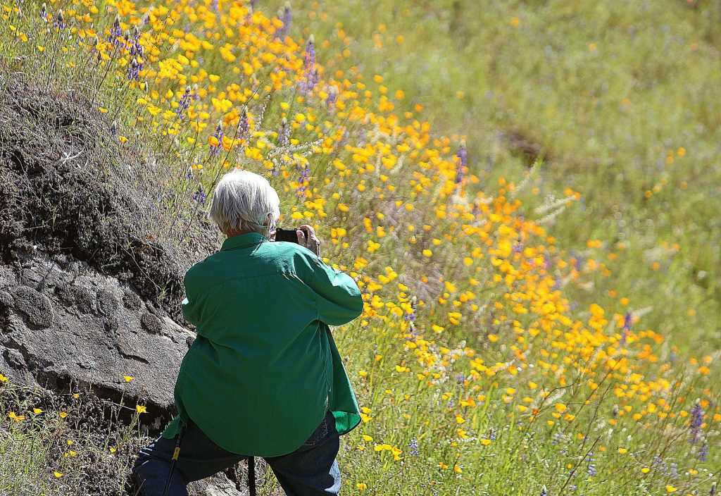 A walker stops to smell the wildflower display along the Buttermilk Bend Trail near Bridgeport Tuesday morning.