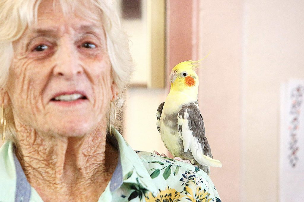 Charlie is the Bret Harte Retirement Inn's community cockatiel, though he shows a particular fondness for resident Susan Michalski.