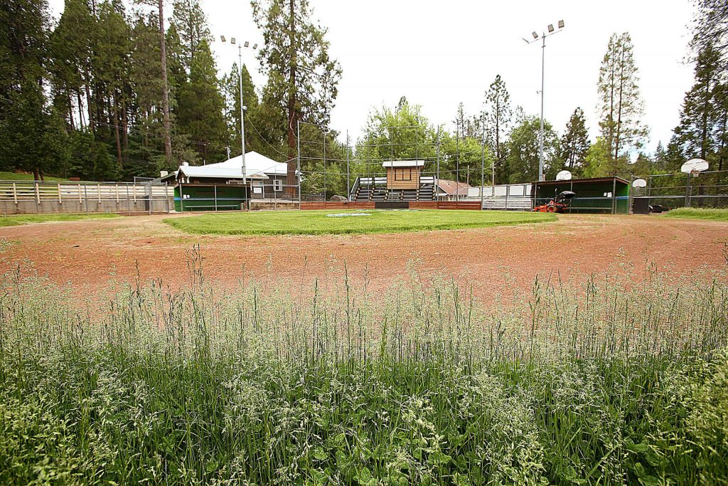 Weeds and tall grass take to the outfield at the Babe Childer's little league field in Nevada City's Pioneer Park.