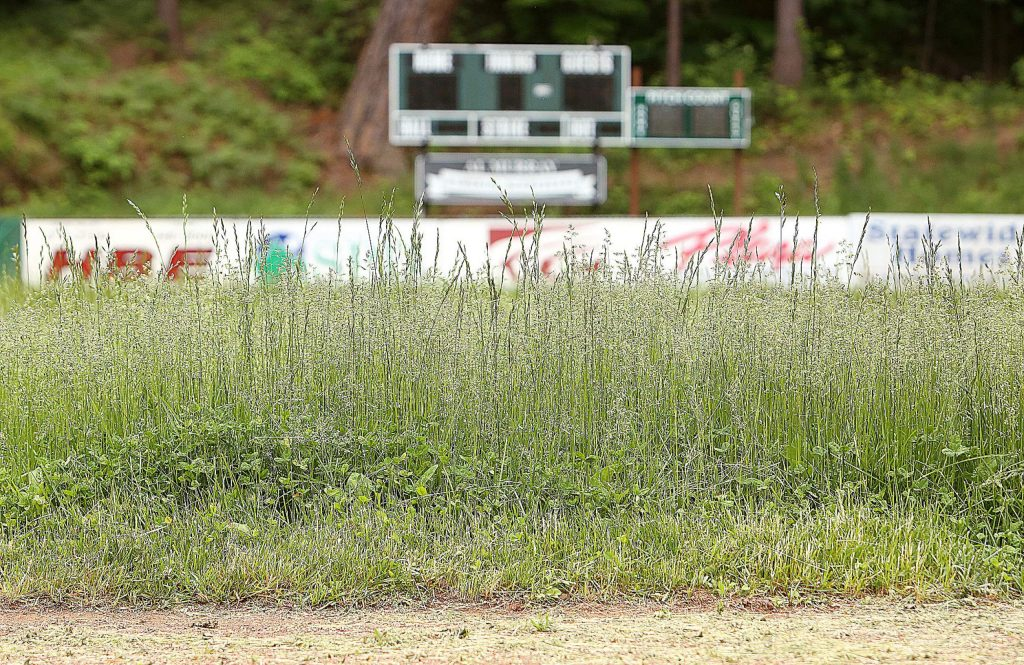 Weeds and tall grass take to the outfield in front of the Al Murray Memorial Scoreboard in Nevada City's Pioneer Park where Nevada City Little Leaguers would normally be playing this time of year.