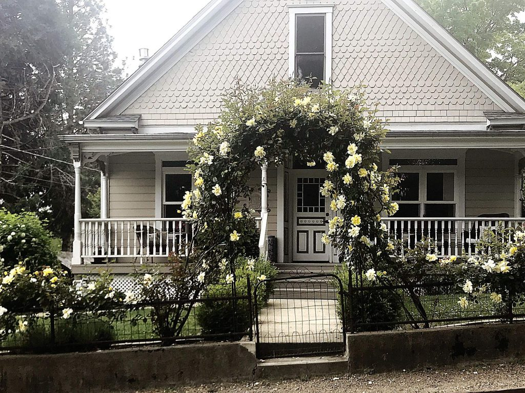 Lovely fragrant yellow roses on an archway on Chapel Street in Grass Valley.