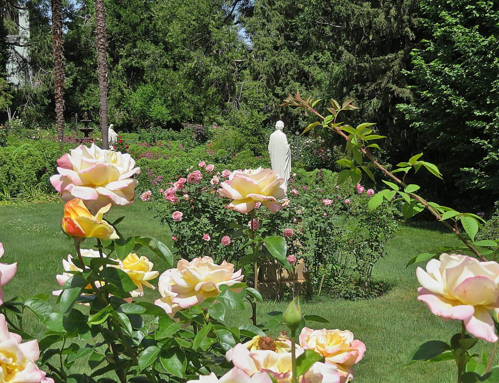 St Joseph's Rose Garden has century old Heritage sweet smelling roses in it.