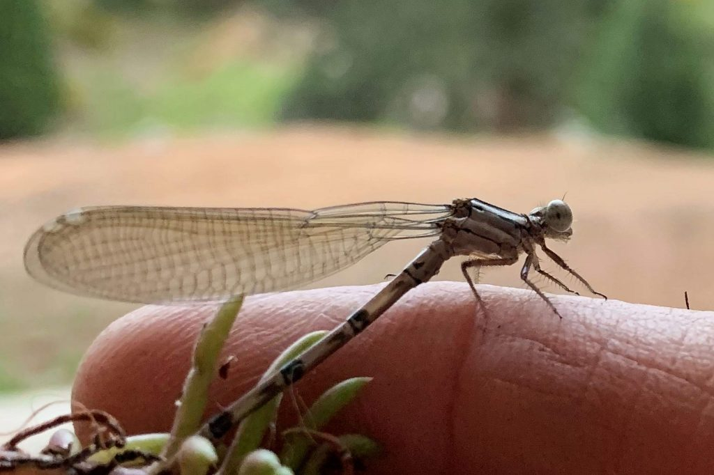 Dragonfly on my finger.