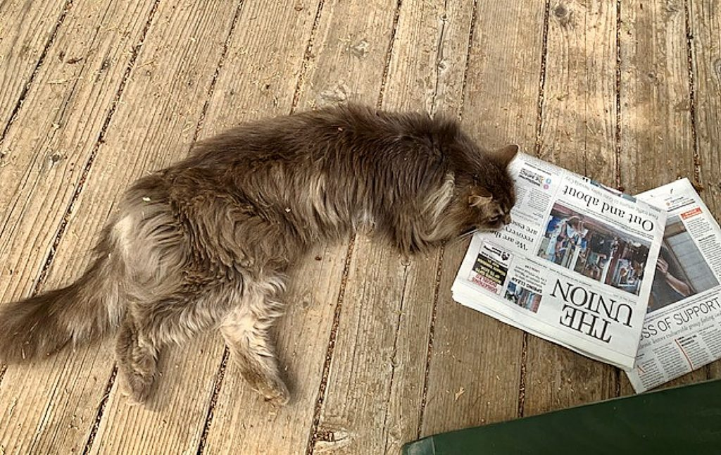 Chester reading The Union.