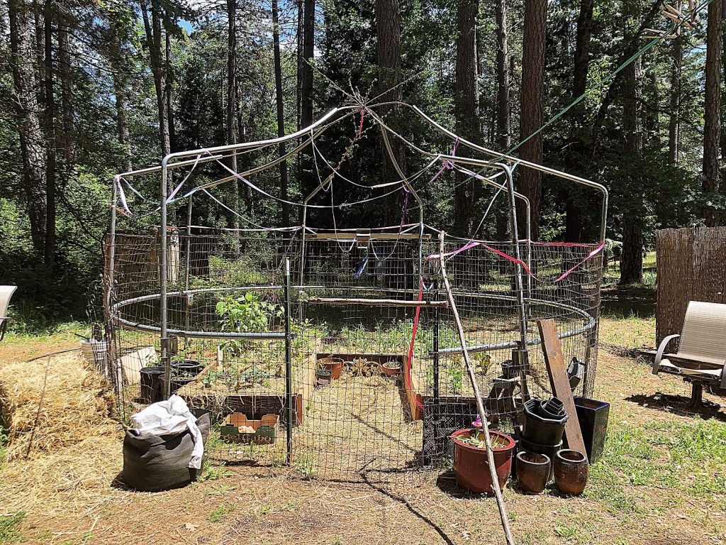 Mielle Chenier-Cowan Rose started from scratch in her partially shaded garden, and used her creativity to construct a fenced garden and raised beds using mostly recycled and reclaimed materials, including an old trampoline frame.