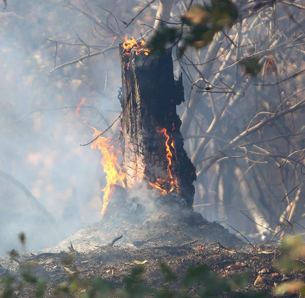 Flames await to be doused during mop up procedures at Monday afternoon Wildwood Fire, which burned two acres near Lake Wildwood.