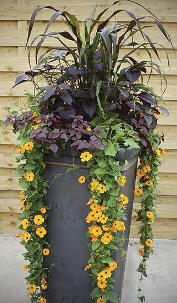 If garden space is a limitation in a growing environment, container gardening may offer another option for gardeners.