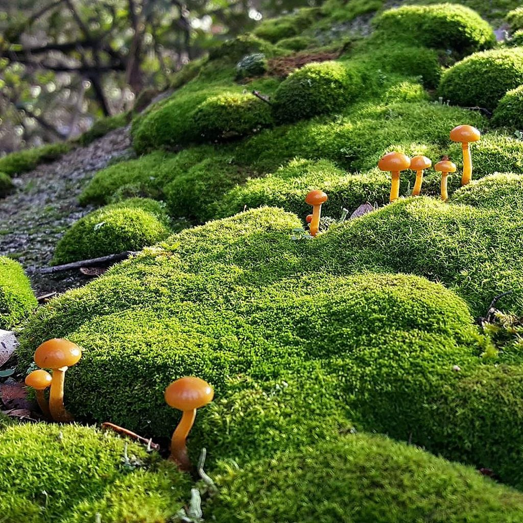 During the cooler, less crowded months, mushrooms grow along the trail.