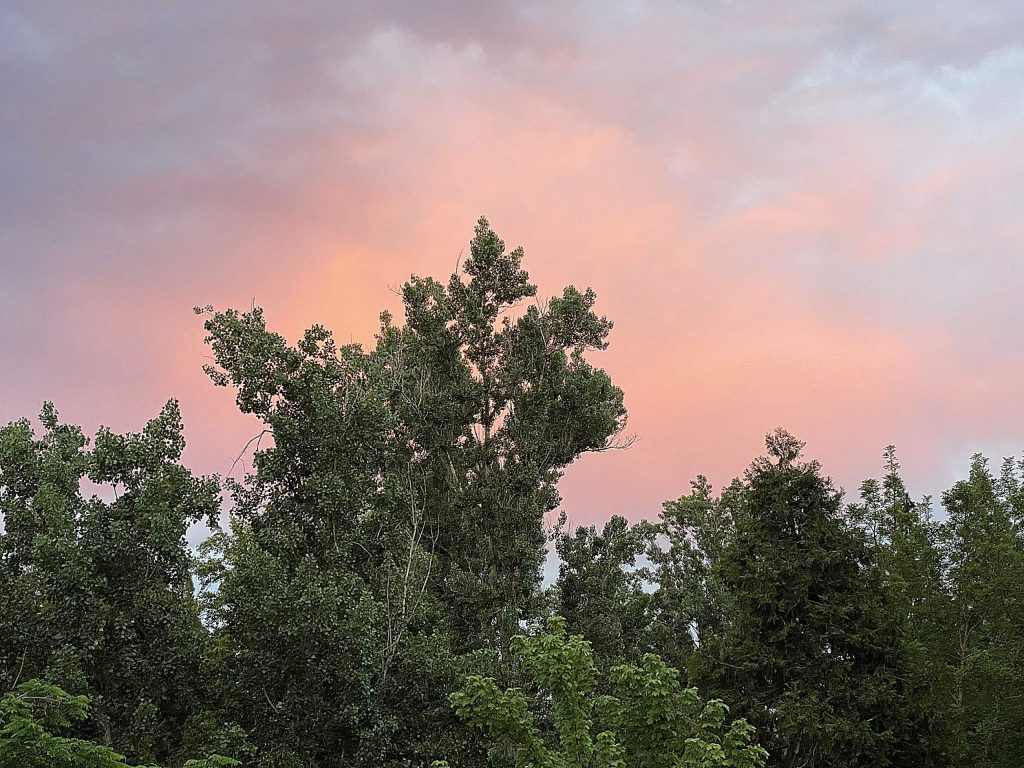 We all know that the sun sets in the west, right? This was taken facing east off the back deck of our house on East Broad in Nevada City in the evening of May 29, 2020. It is a reflection of the sunset off the clouds that preceded the rain that arrived in the early morning hours the next day.