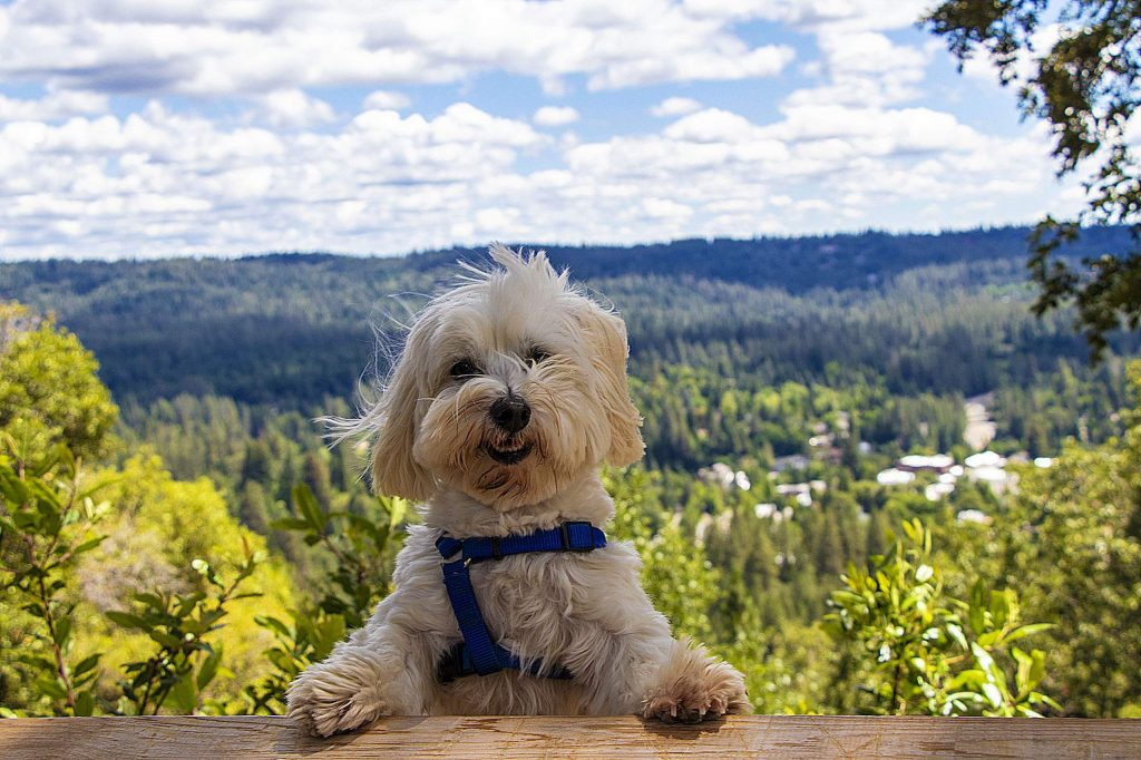 Oliver enjoying the beautiful cloud formations Sunday afternoon at Sugar Loaf Mountain in Nevada City.