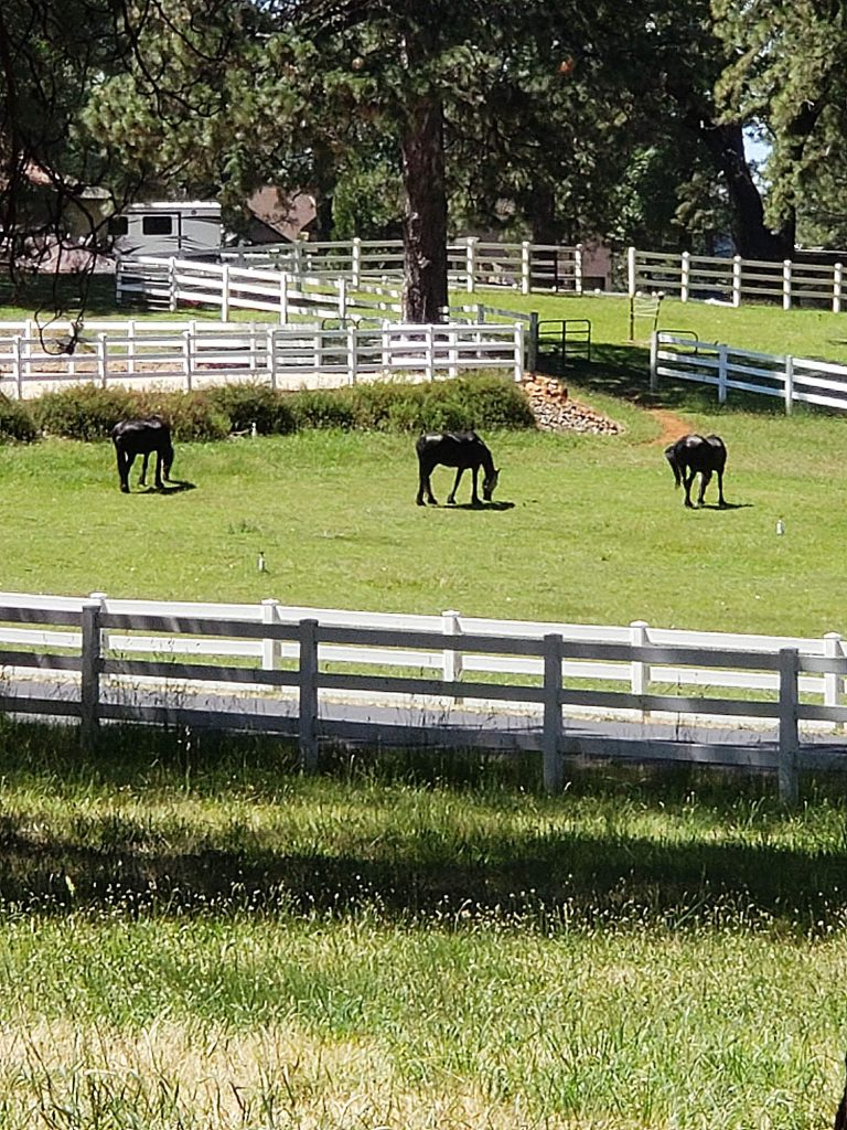 I caught these three enjoying the grass off Allison Ranch Road.