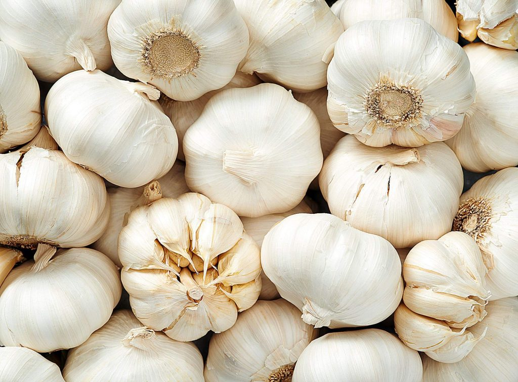 Mature garlic is at its best from now until fall. Look for bulbs that are dry and hard, with tight skin. I usually choose bulbs that have large cloves, as they are easier to peel. Bulbs that are soft and fluffy were not matured properly and will not be good.