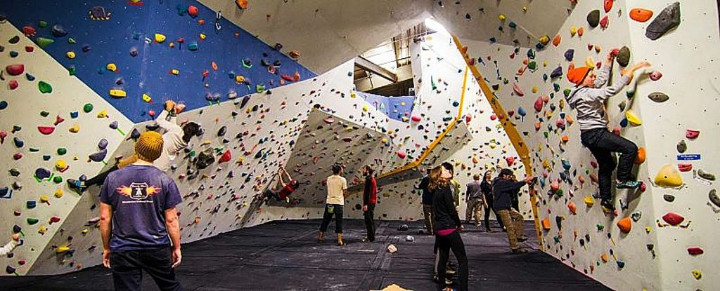 Climbers of all different levels enjoying the work out of climbing at Gold Crush Climbing gym. The gym is located at 124 Clydesdale Court, Suite D in Grass Valley.