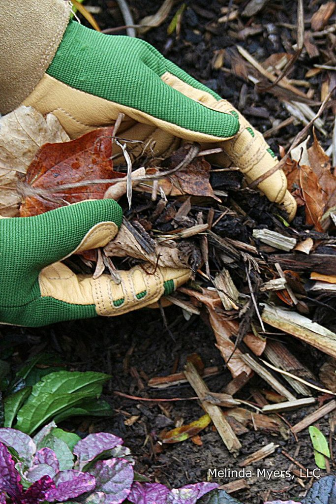 Mulching garden beds and around trees and shrubs conserves moisture, keeps roots cool and moist, and suppresses weeds.