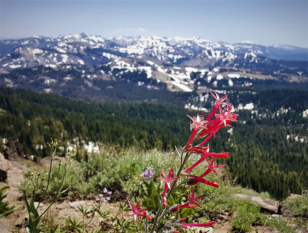 Wildflowers and snow along the peaks in the distance are only some of the stunning views you'll see on your hike to Castle Peak.