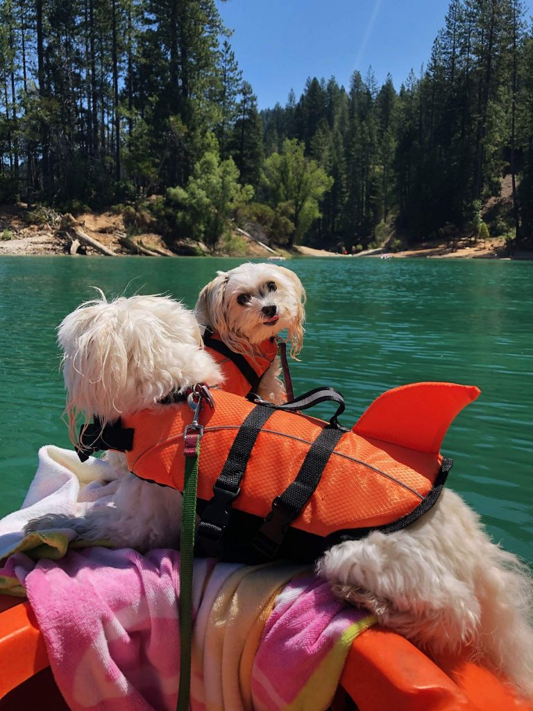Kayaking today with Bernie and Lily at Cascade Shores!