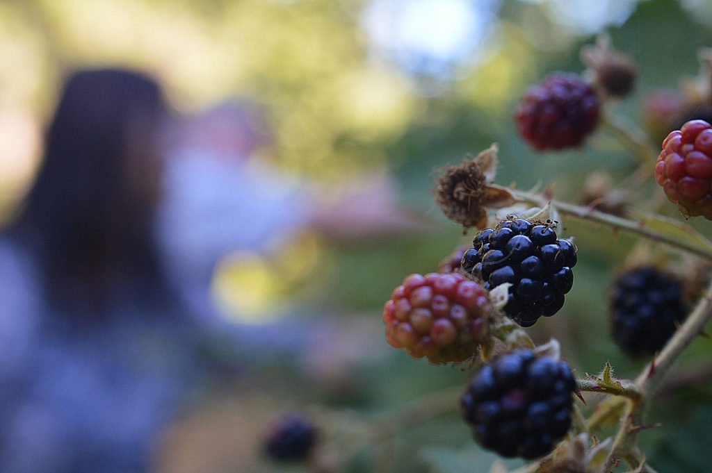 Kum and Kevin picking blackberries on the Litton Trail.