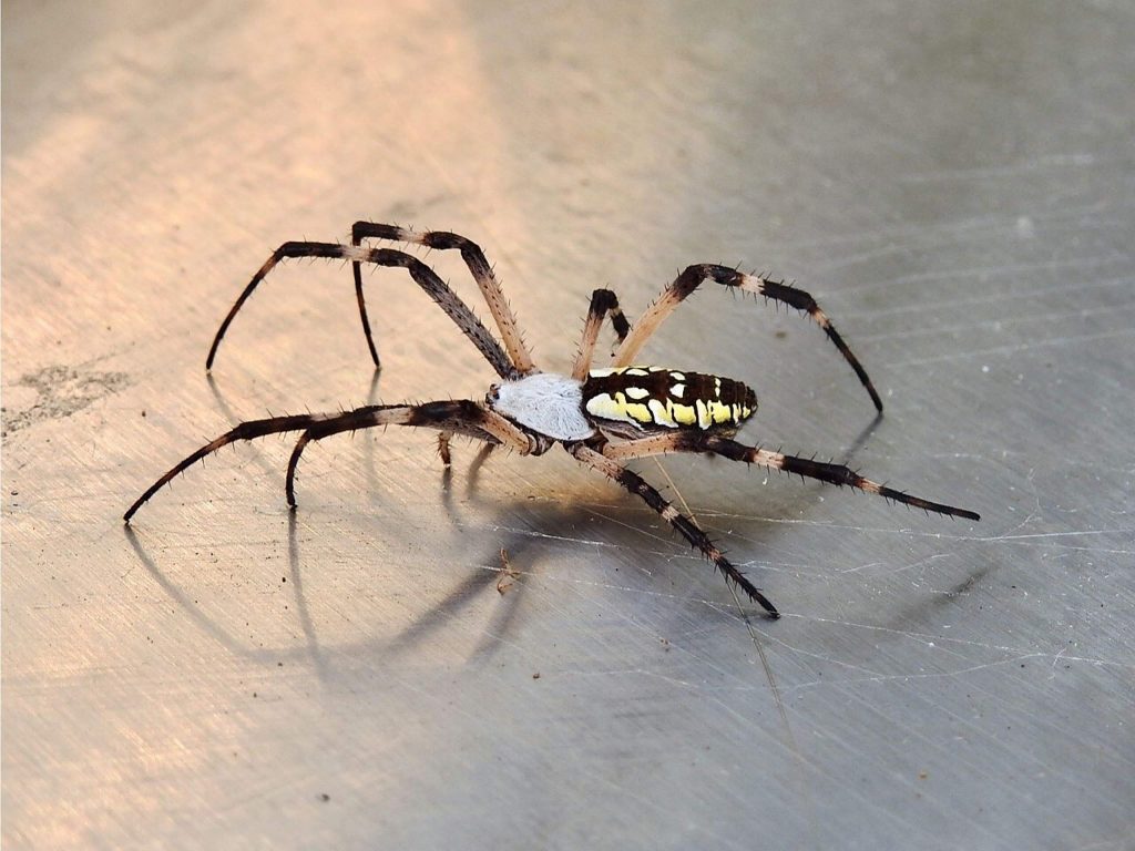 Anyone familiar with this beauty hiding in our BBQ?