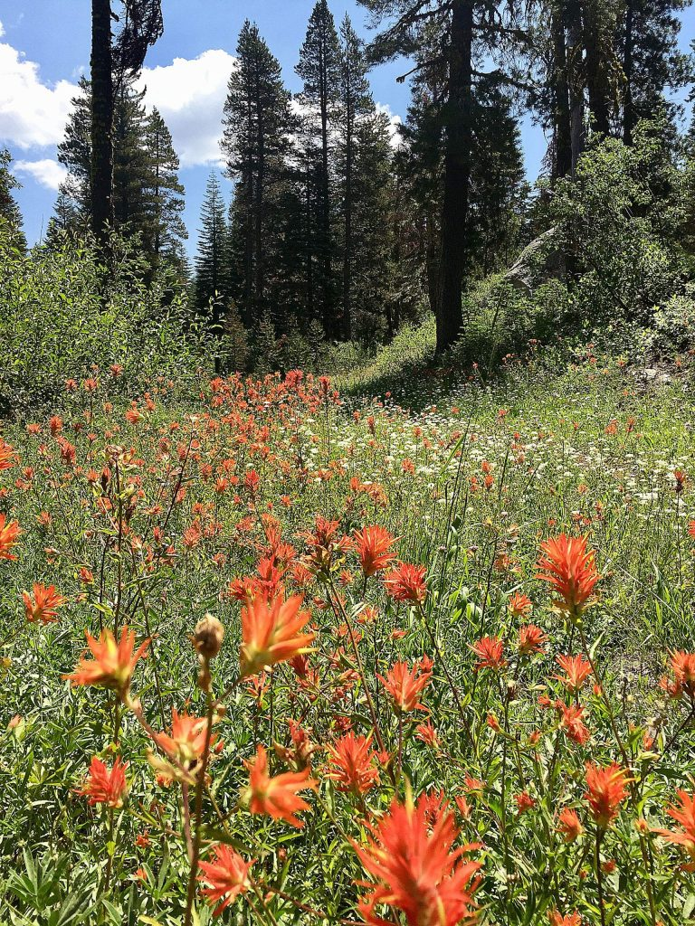 Indian paintbrush on the trail to Lyles lookout in Serene Lakes.
