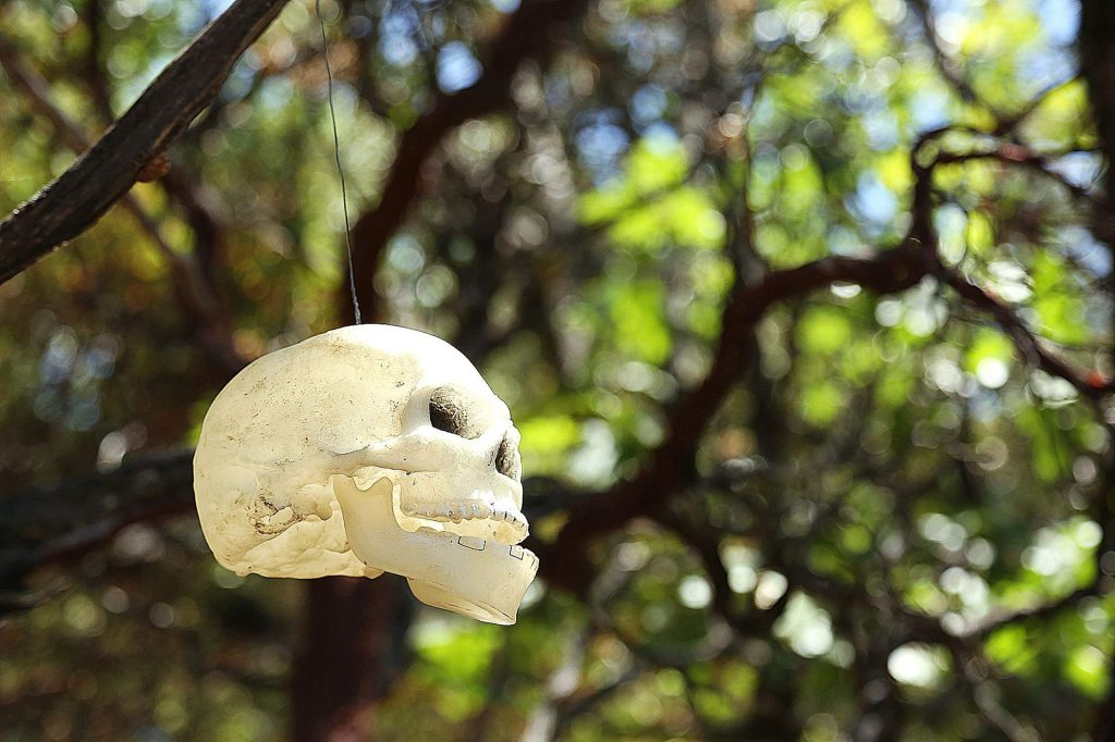 A plastic skull hangs from a tree along the trails near the Sugarloaf Mountain homeless encampments that were previously cleared.
