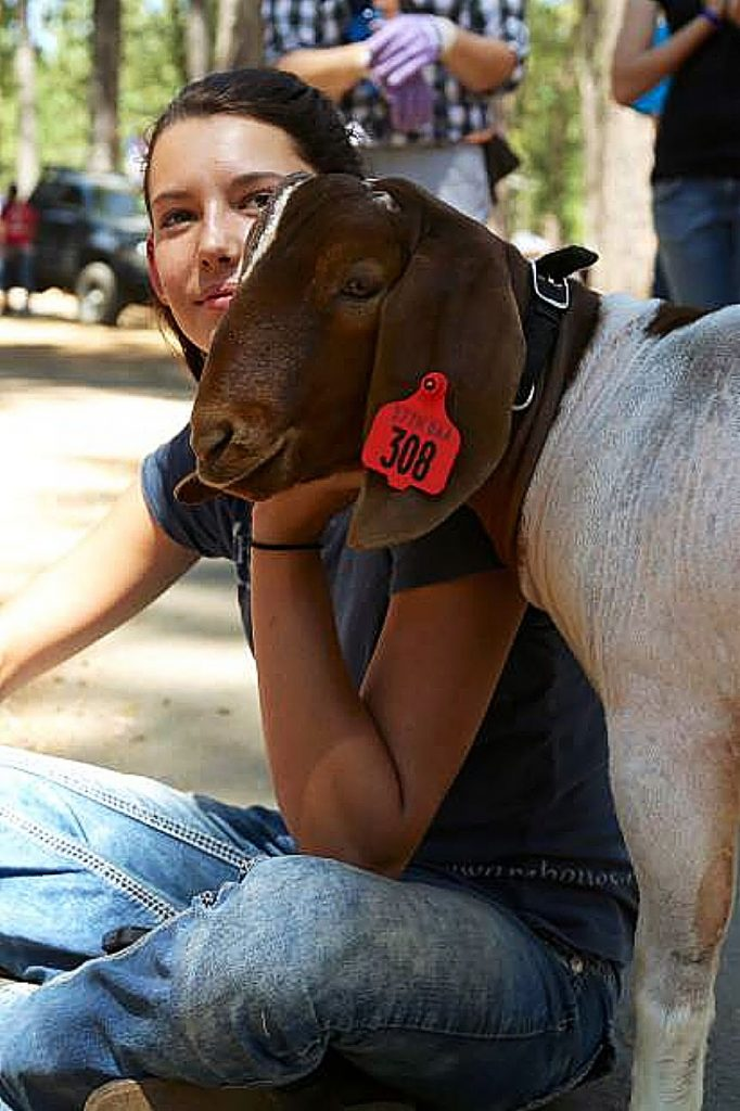 Youth of the community prepare their animals for the Nevada County Junior Livestock Show at the fairgrounds in previous years. This year's event will be held online.