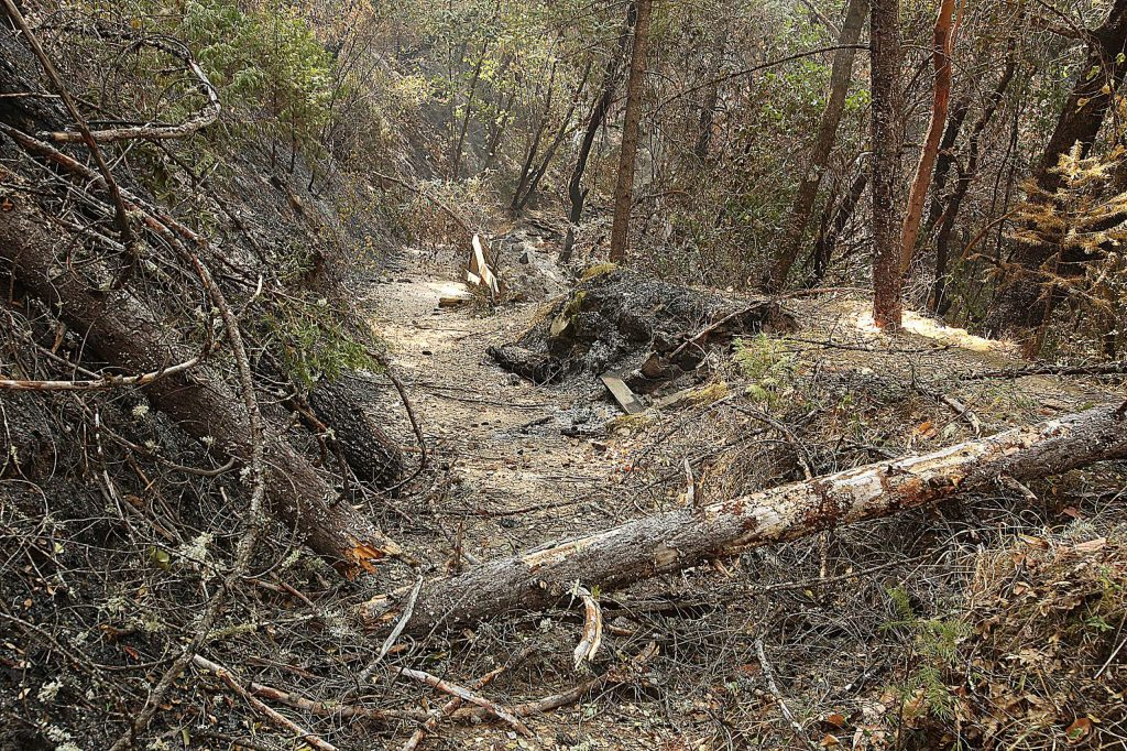 Many fallen trees and limbs continue to make their way onto the Independence Trail after the Jones Fire burned through the area earlier this week.