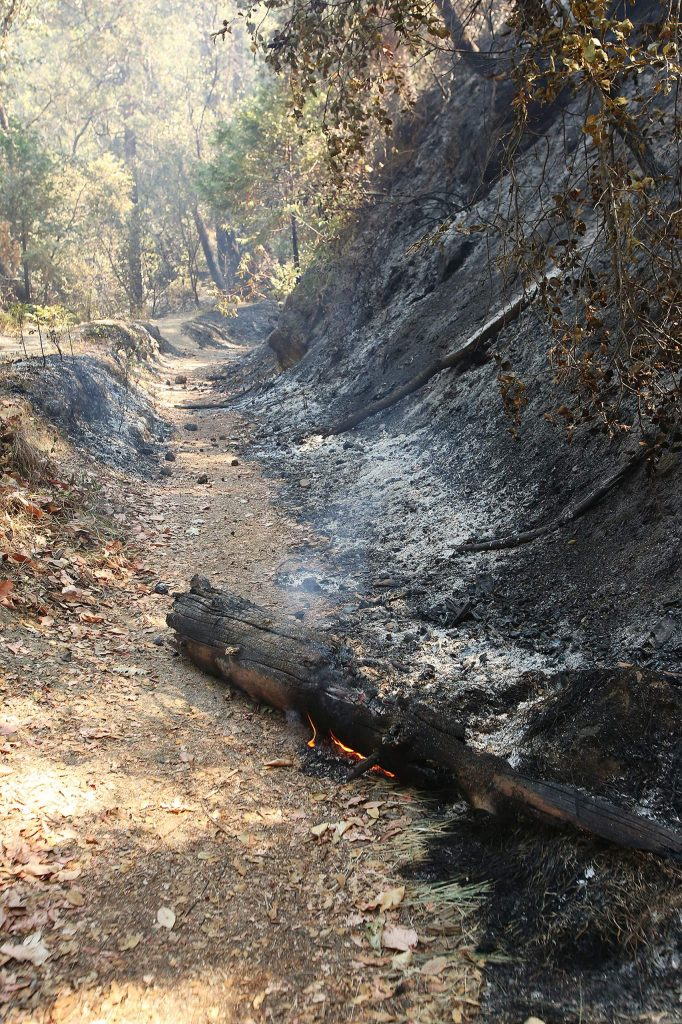 A log burns along the Independence Trail Thursday.