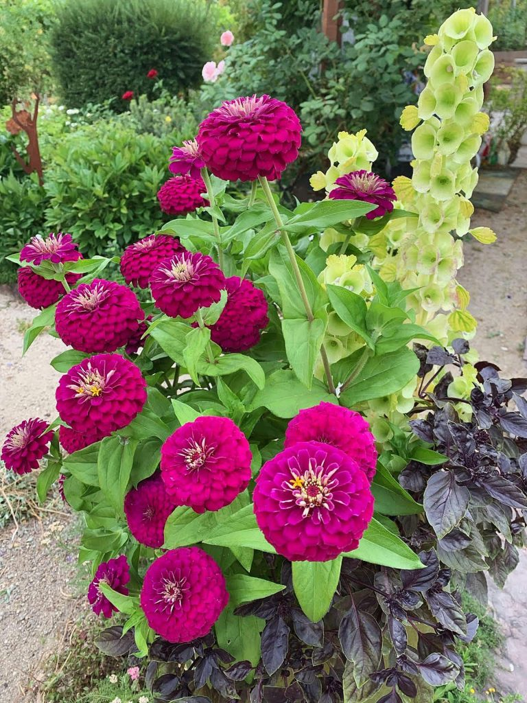 As more people are spending time at home in their gardens, growing flowers specifically for cutting seems to be on an upswing. There are so many beautiful flowers blooming in many of our local gardens.