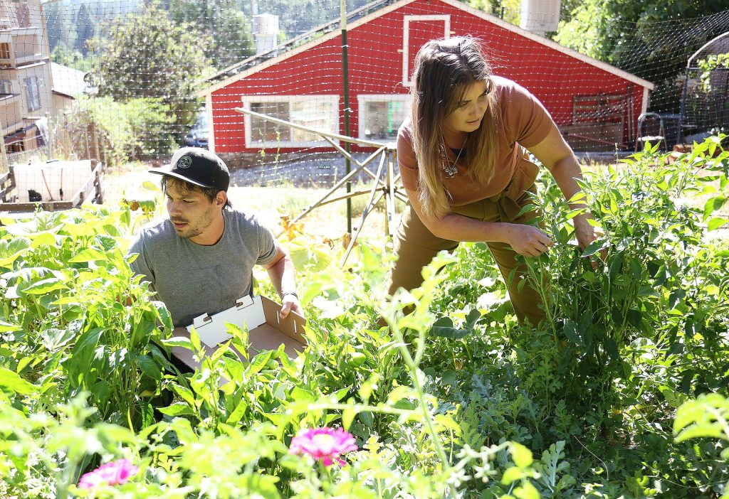 Noah Palmer and Megan Buser of Osorio Kitchen pick fresh fruits and vegetables from their garden behind their kitchen as they prepare for their end of the week to-go meals.