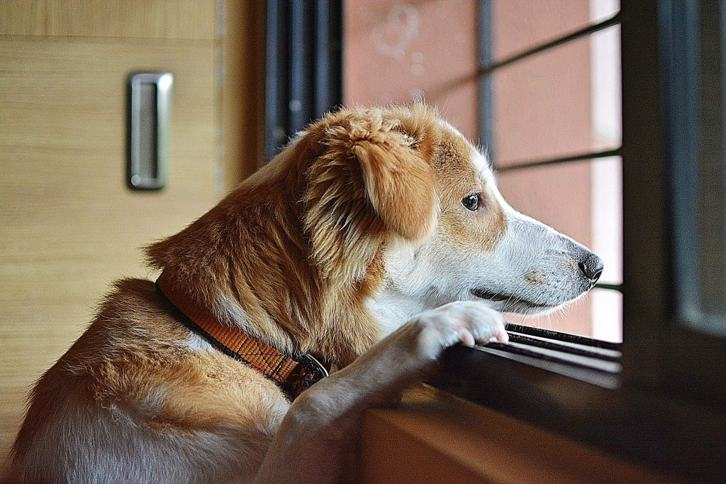 Stay Home Stay Safe. Smiling young attractive woman playing with cute puppy dog border collie on sofa at home indoors. Girl huging new lovely member of family. Pet care animal life quarantine concept