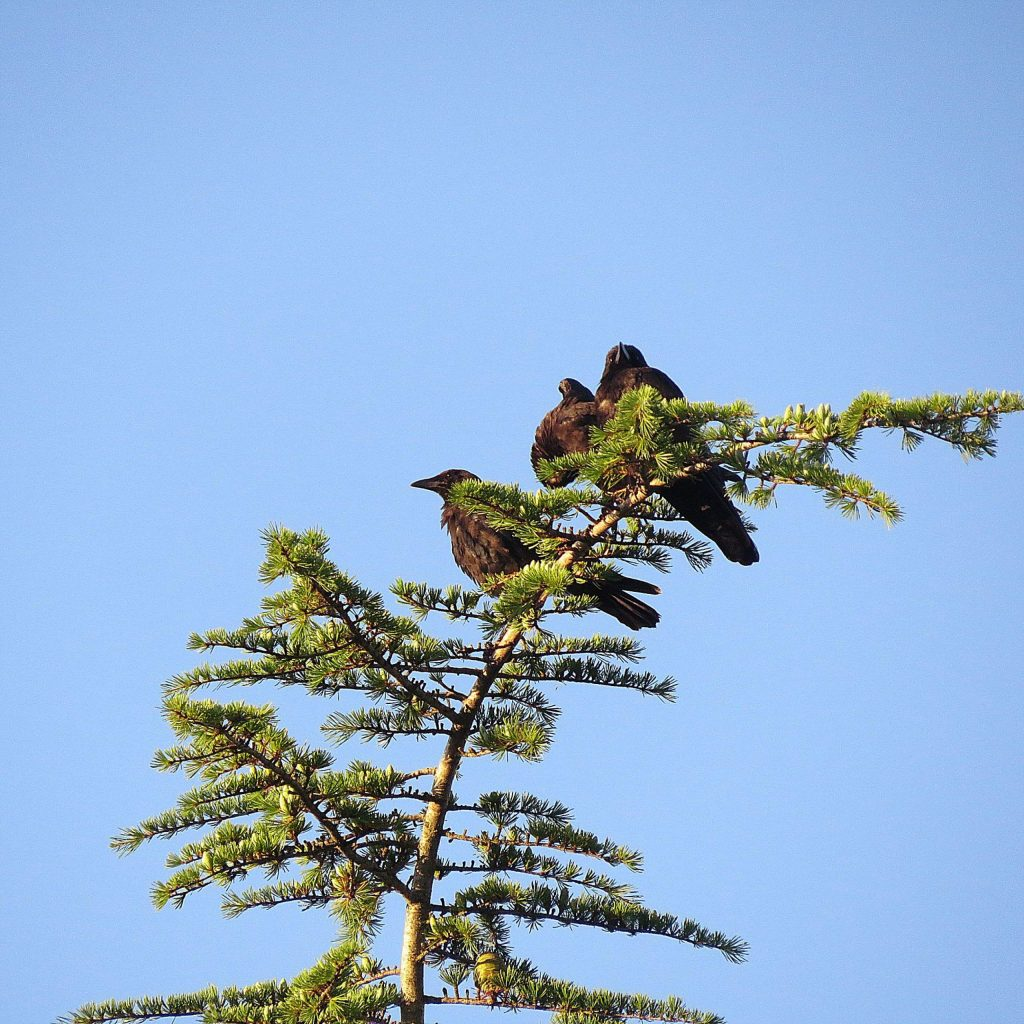 Three birds on the same branch here at Lake of the Pines.