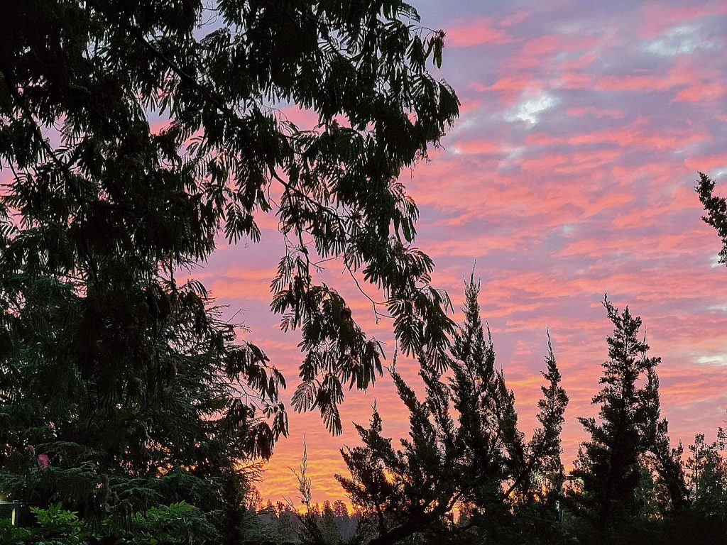 Sunrise on August 14 in Grass Valley.