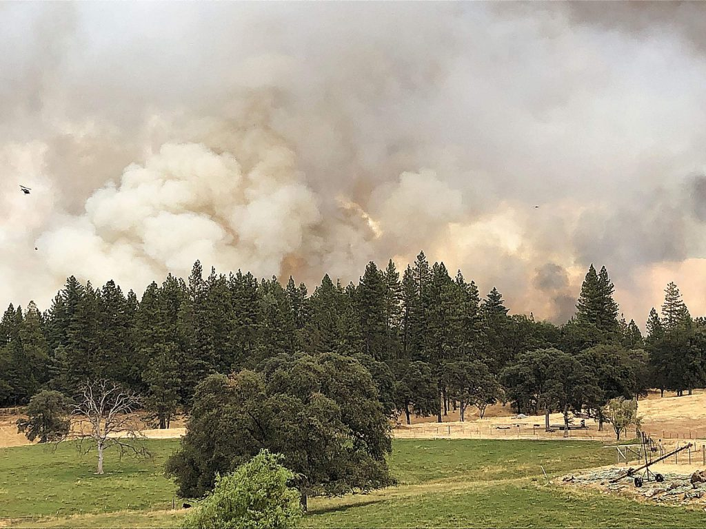 This is why you graze and irrigate for livestock (Jones Fire, August 19).
