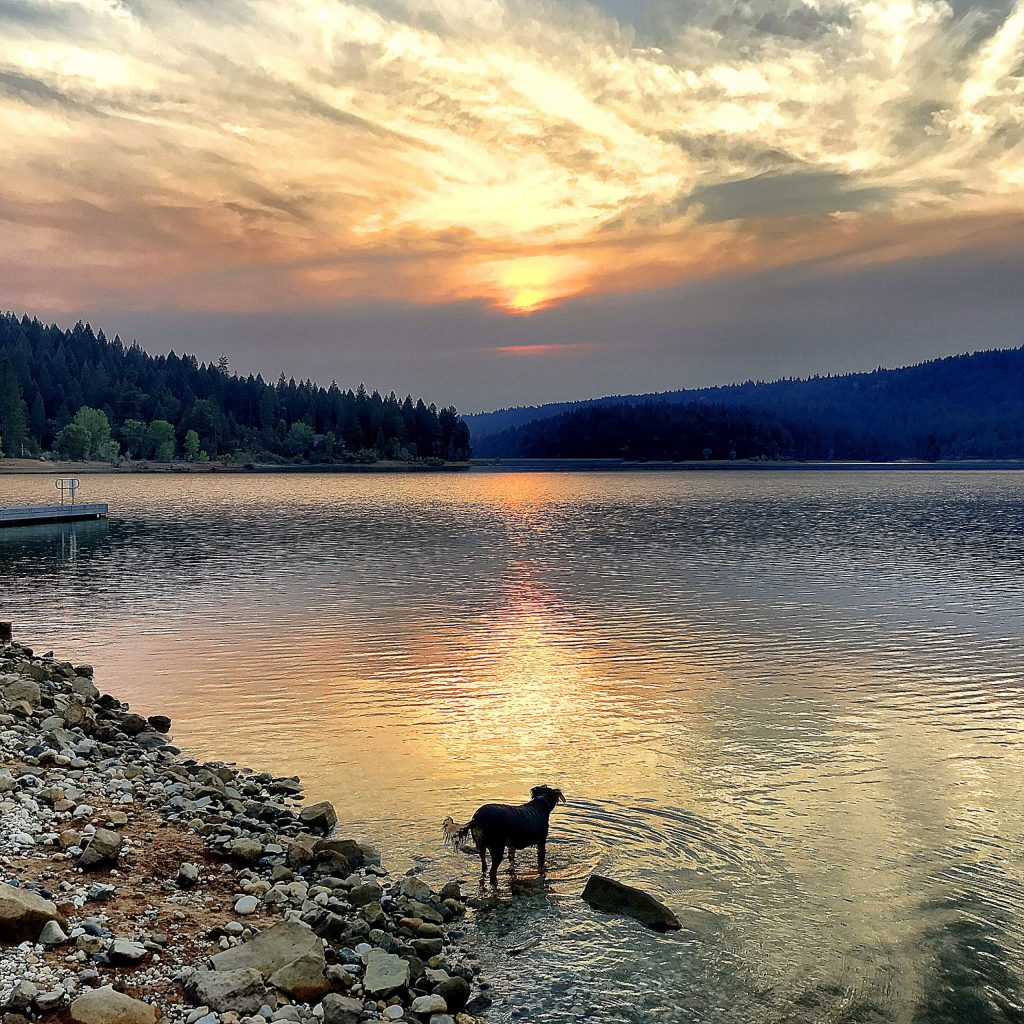 Zouki enjoying the sunset on Tuesday (August 18) at Scotts Flat Lake. Smoke in the distance from the Jones Fire.  Evacuation warnings only eight miles away.