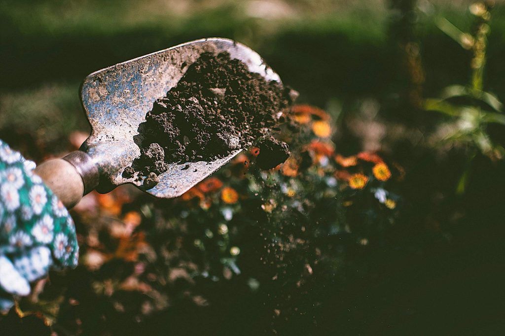Regenerative agriculture includes soil-building farm and garden practices that increase organic matter. It uses old practices that include composting, cover-cropping and green manuring, no tillage, and keeps the underground soil world vibrant.