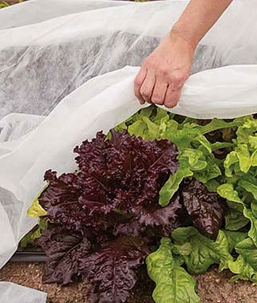 """Master Gardeners of Nevada County are offering the second session of the workshop, """"Broccoli, Lettuce and Kale, Oh, My! Cool Season Vegetable Gardening"""" – today at 9 a.m., live on Zoom."""