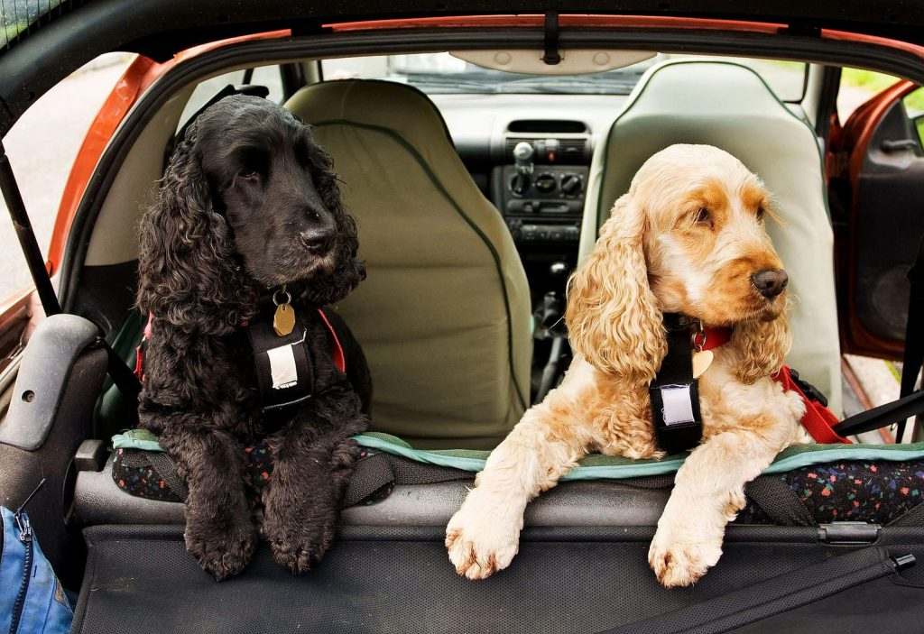 As with most things, planning ahead is the key to a successful road trip. Make sure your dog has a collar with an ID tag, but remember that collars can come off, so make copies of vaccination certificates and anything related to specific health conditions. Pack medications, a dog first-aid kit, and your veterinarian's contact information.