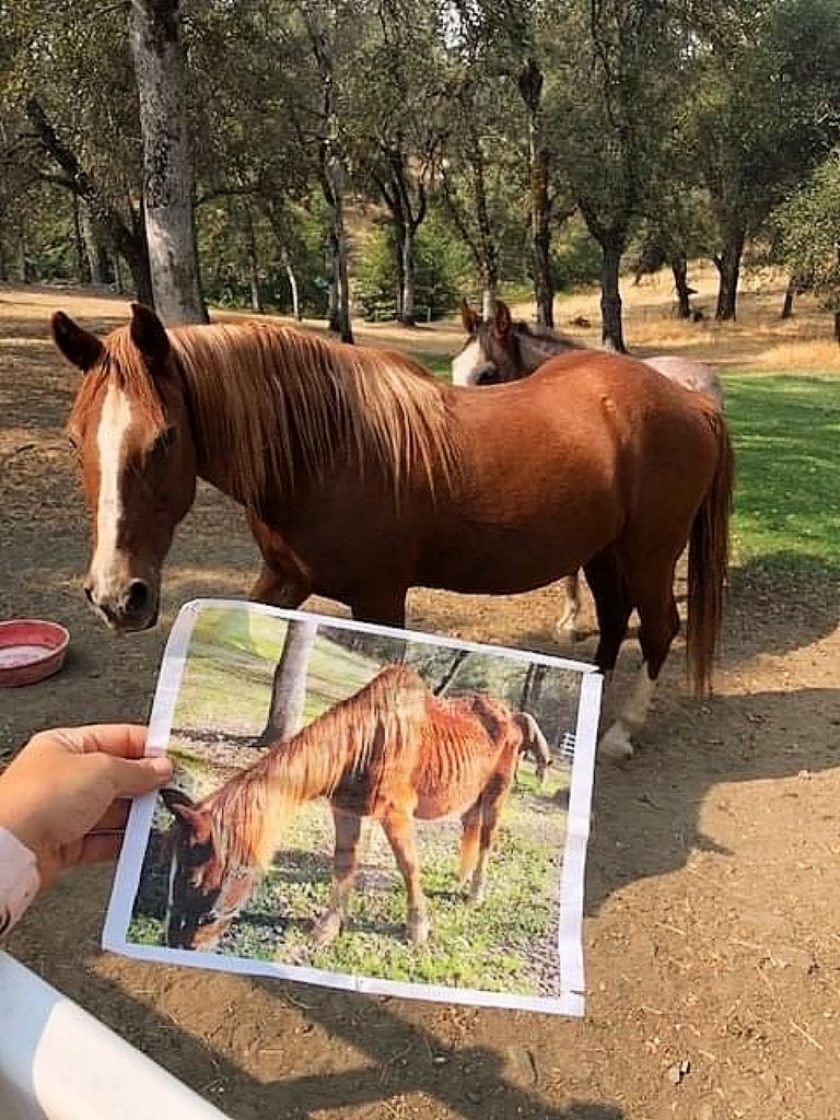 Princess the horse before and after receiving care from Sammie's Friends, local veterinarians, and her foster family.