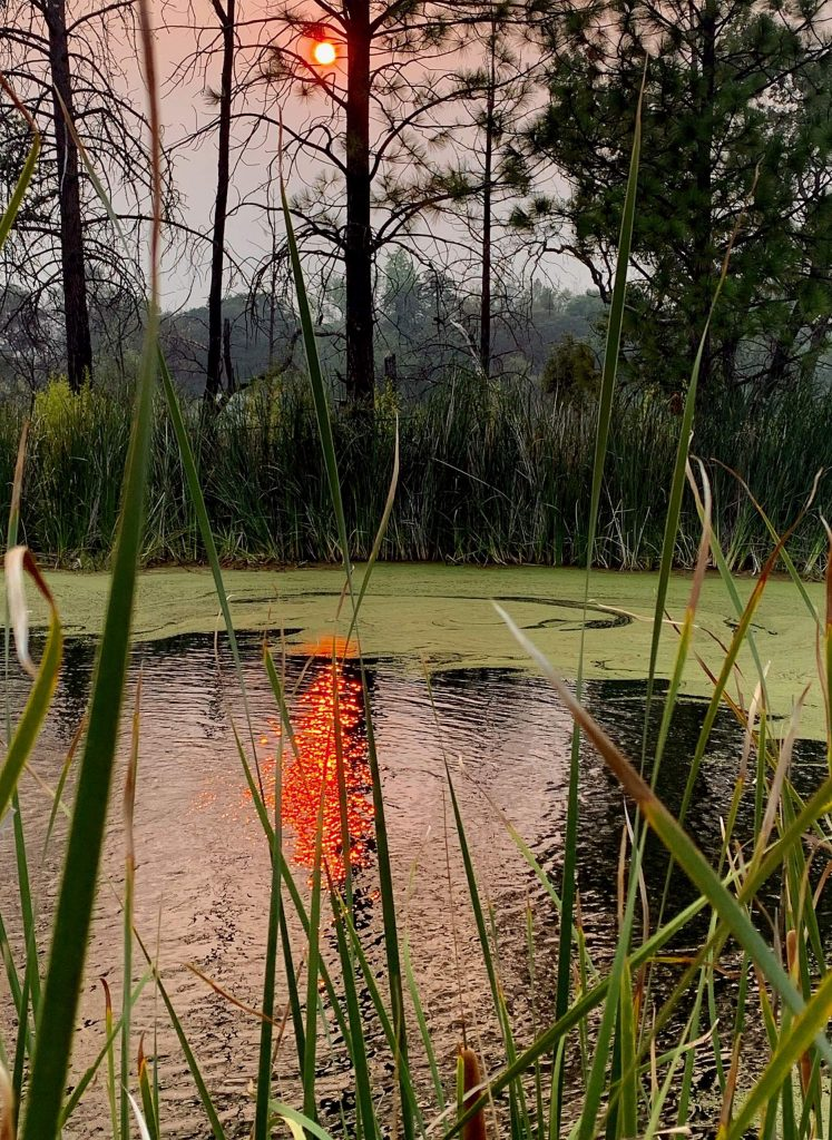 Sun's fiery red reflection in my pond at sunset during the Jones Fire, in Rough and Ready.