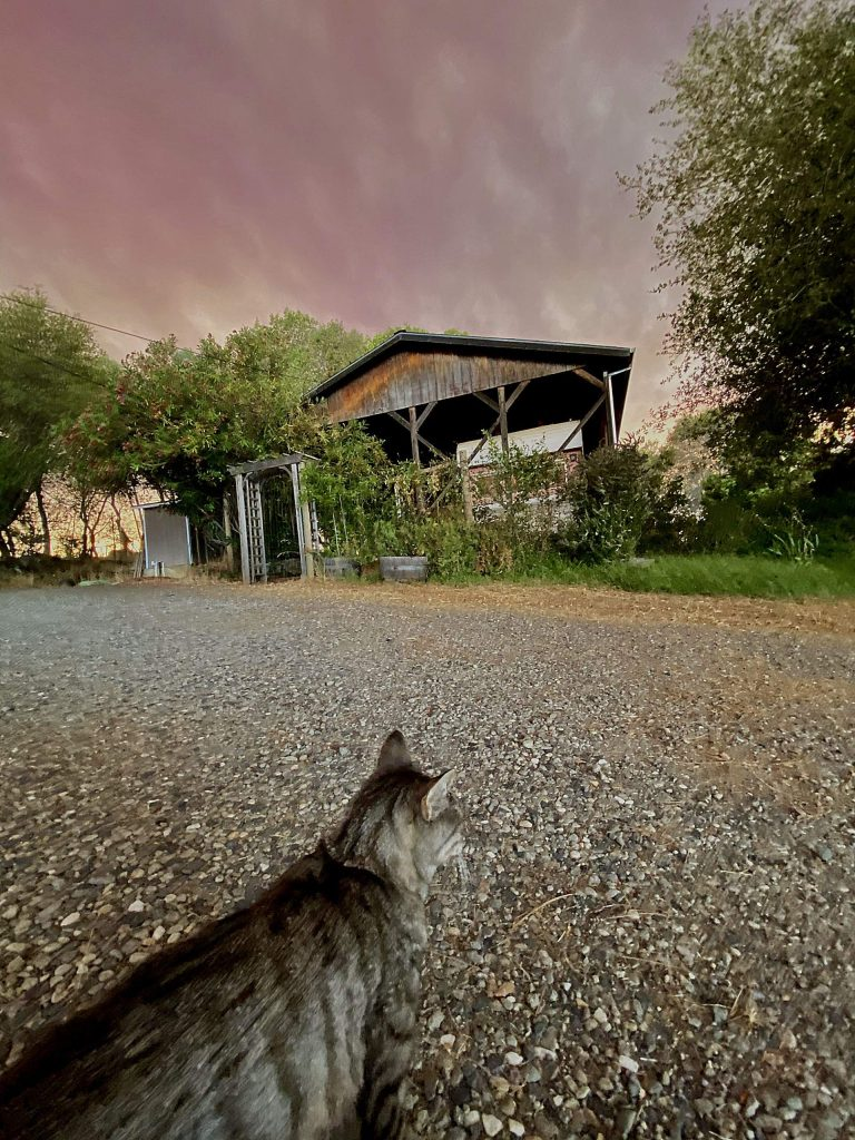Tiggy the cat survived the Lobo fire so he is vey alert to the wind and smoke.