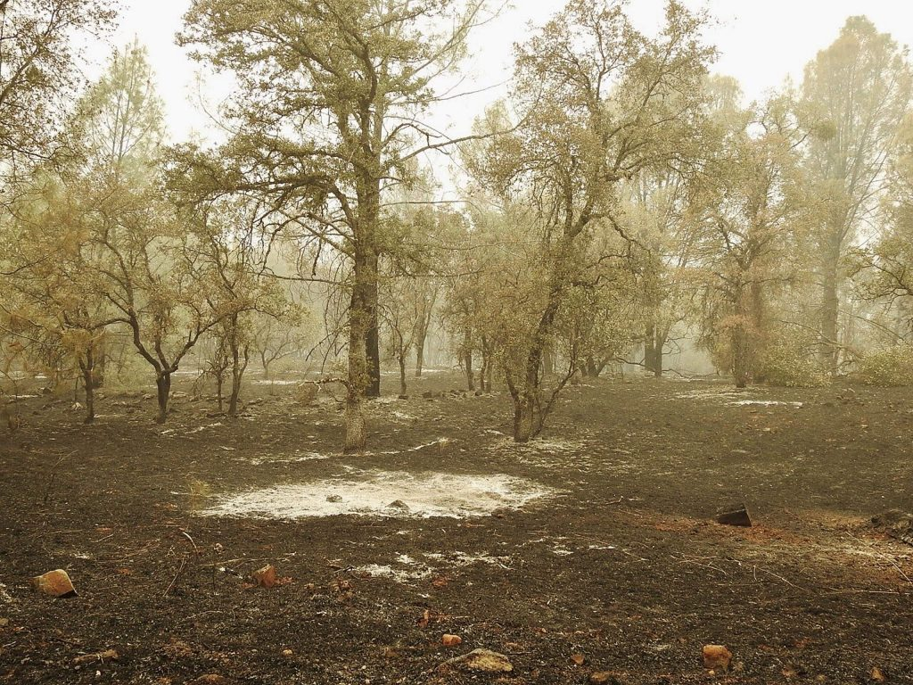 Willow Fire burn scars.