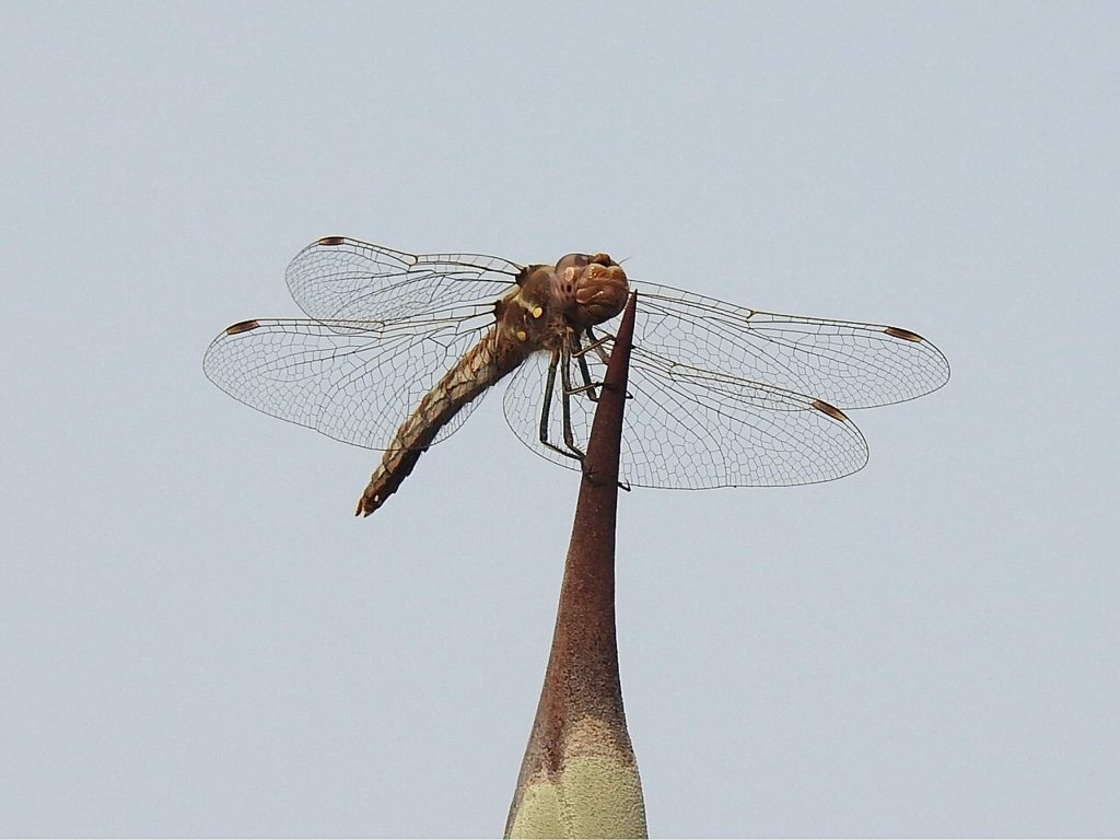 Dragonfly on a cactus.