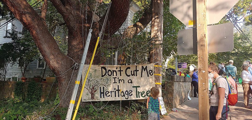 A child examines a sign Tuesday morning protesting PG&E's plan to cut more than 250 trees around downtown Nevada City. Nearly two dozen demonstrators were on hand.